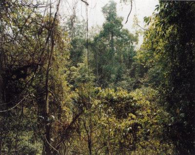 Paradise 10, Xi Shuang Banna, Prov. Yunnan, China 1999