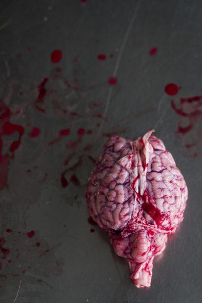 Gehirn (Encephalon), Leibniz IZW, Berlin 2016